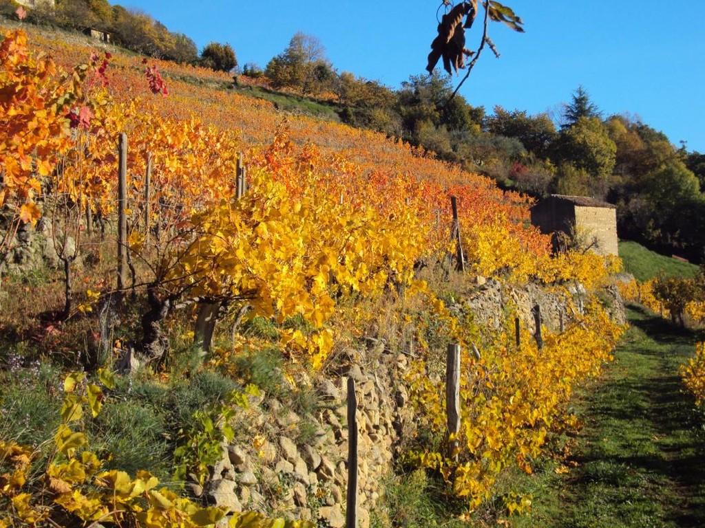 coteau de vignes de la famille Tourrette